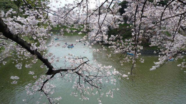 東京の花見スポット