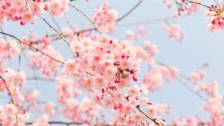 小金井公園桜祭り